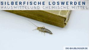 Silberfisch loswerden - Hausmittel und chemische Mittel