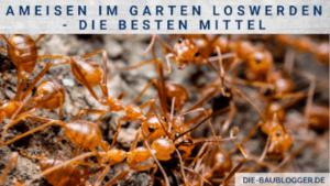 Ameisen im Garten loswerden - Die besten Mittel