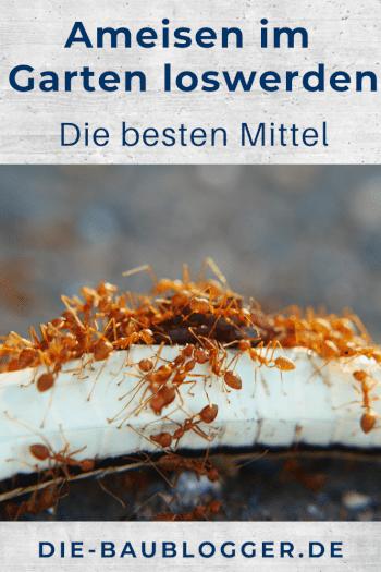 Ameisen im Garten loswerden - Die besten Mittel Pinterest